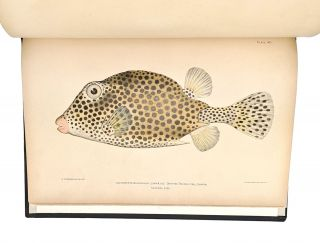 Investigations of the Aquatic Resources and Fisheries of Porto Rico by the United States Fish Commission Steamer Fish Hawk in 1899